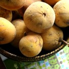 santol1